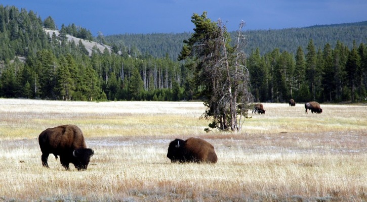 Yellowstone – Plume or Not?