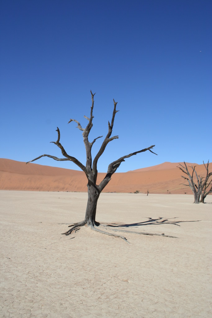 Photo 3: Colours of a photographers dream in the pan of dead trees 'DeadVlei'.