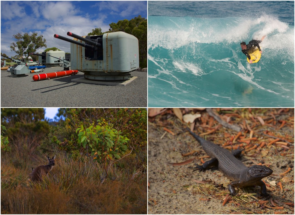 Clockwise from top left: Battery guns at the National ANZAC Centre; a local recreating; a land mullet (largest of the skink family); red kangaroo