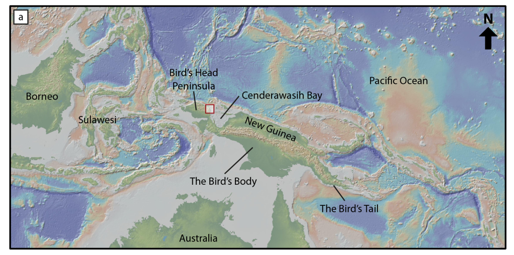 Topographic and bathymetric map of New Guinea, highlighting its bird-like shape. The Bird's Head is located in the west and is part of Indonesia. Half of the Bird's Body is within Indonesia, whilst the other half is within Papua New Guinea, along with the Bird's Tail. Base map obtained using Ryan et al. (2009).