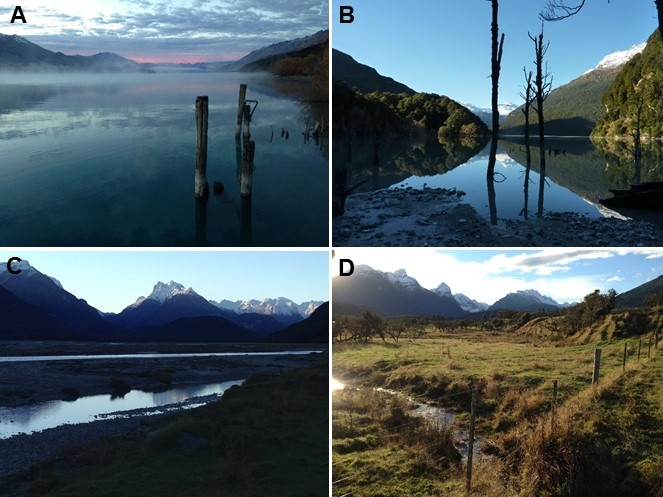 Figure 6: (A) Lake Wakatipu from Kinloch; (B) The new lake at Slip Stream; (C) and (D) the Dart River and surrounding mountains near Paradise…no, seriously, that is the name of the place.