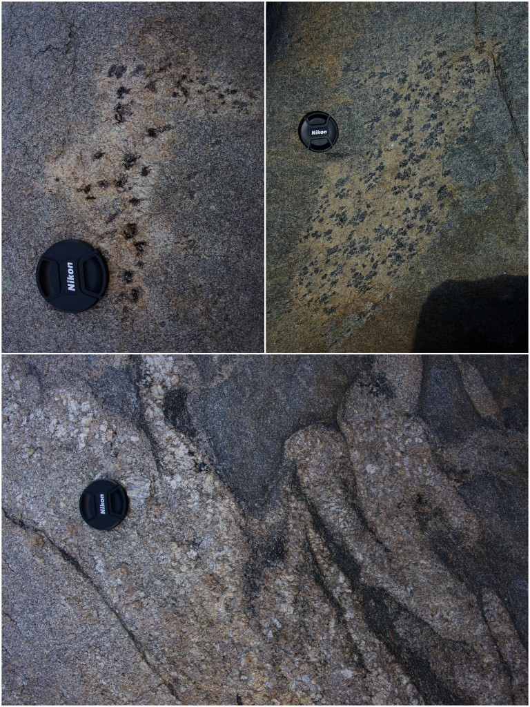 Top: examples of splotchy biotite enclaves in migmatitic gneiss; bottom: deformed granitic intrusions