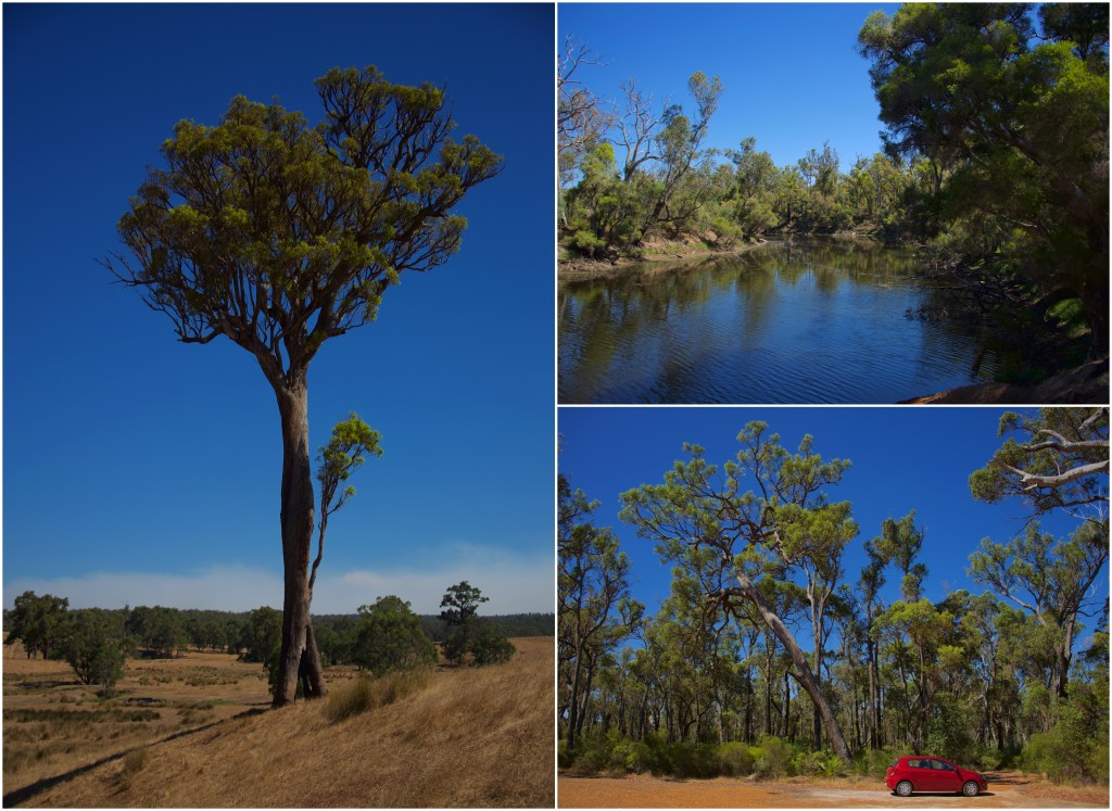 Left: a large eukalypt tree; right-top: the Franklin Rivier; river-bottom: car for scale