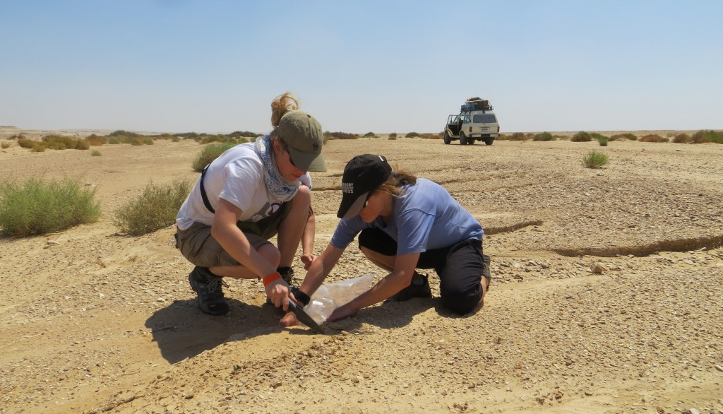 Sampling a point bar in Wadi Kharit, Cretaceous 'Nubian' sediments dominate the immediate surroundings.