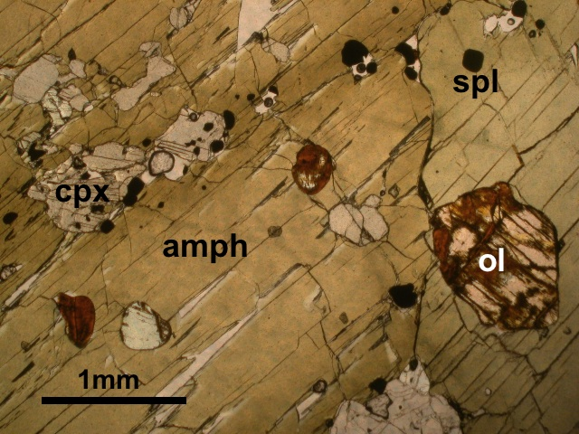 Fig. 4: Thin section photomicrograph of a hornblende gabbro collected from Grenada; field of view shows poikilitic horblende with inclusions of olivine, cpx and spinel.
