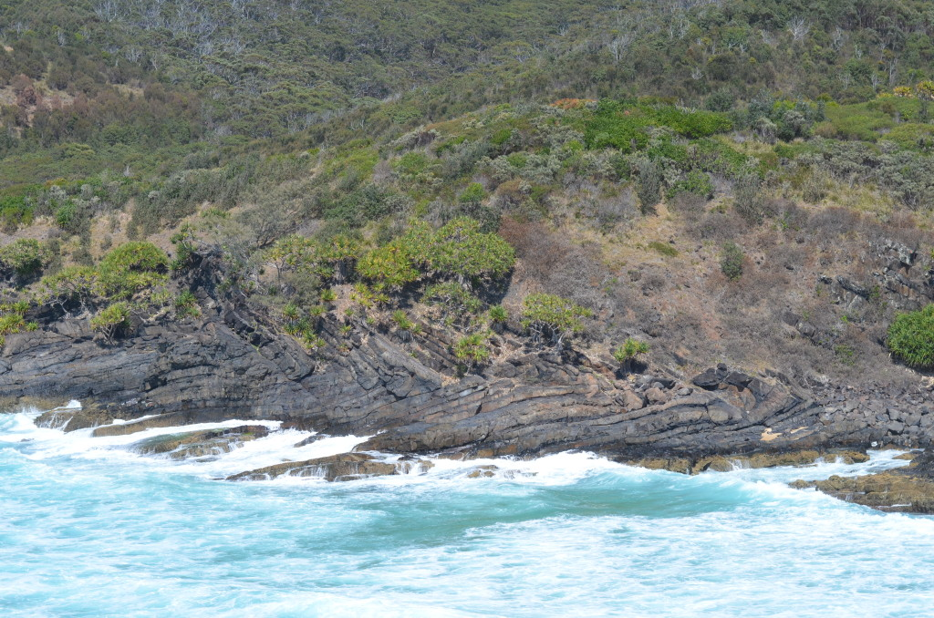 Figure 5: A mesoscopic recumbent fold in Smoky Cape, Nambucca Block, New south Wales, Australia.