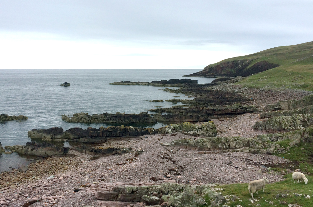 Fig. 2 – Typical coastal exposures of Torridonian sandstone that dip at moderate angles towards the north. The promontory of rock and sea stack formed by the Stac Fada Member is clearly visible. Sheep for scale.