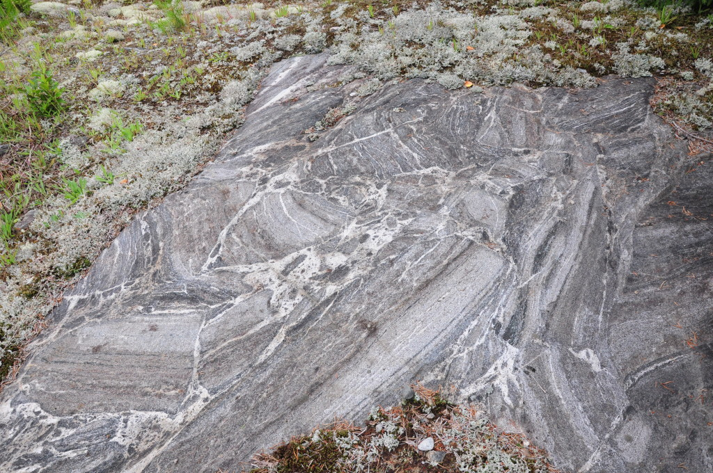 Fig 3. Diatexitic migmatite with re-oriented schollen indicating significant melt loss.