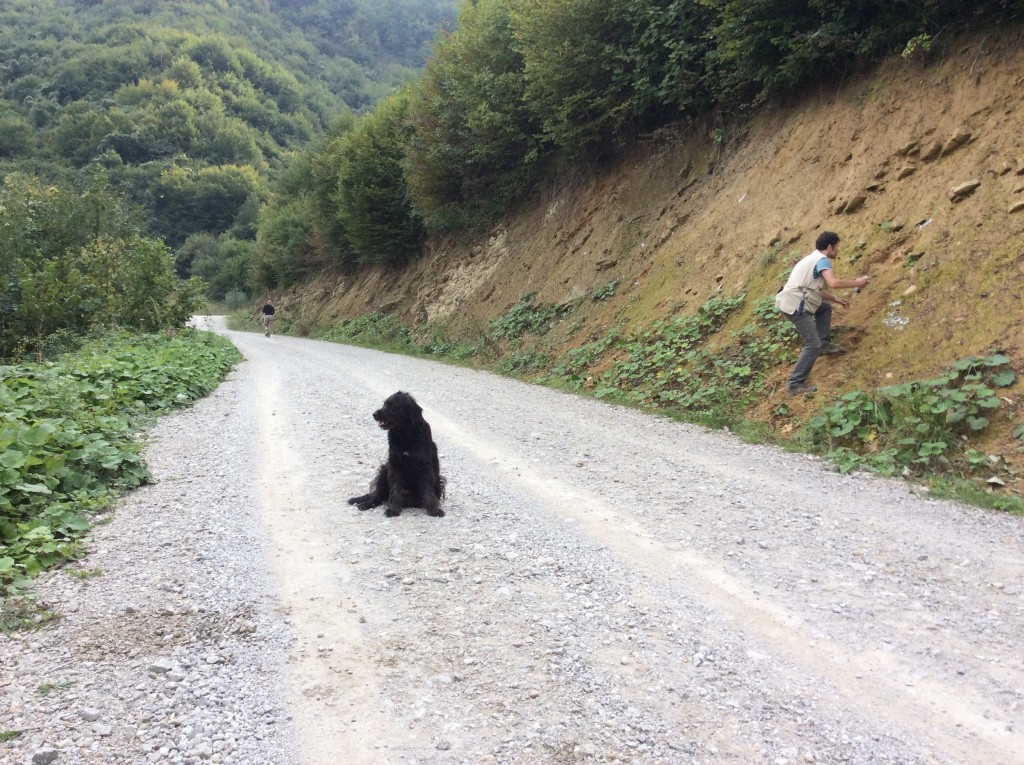 'New road section', with our hairy friend.