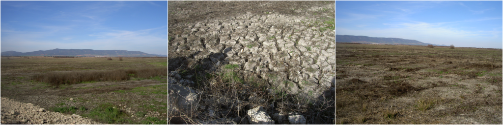Dried-up wetland Tablas de Daimiel. (Photos by Henny Van Lanen).