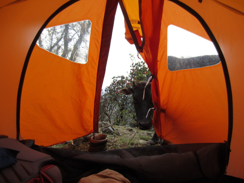 Photo 6. Sometimes unexpected visitors swing by your tent to say hello.